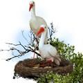 Гнездо с аистами цена 4000 руб.