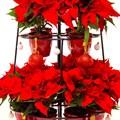 Цветочница новогодняя елка